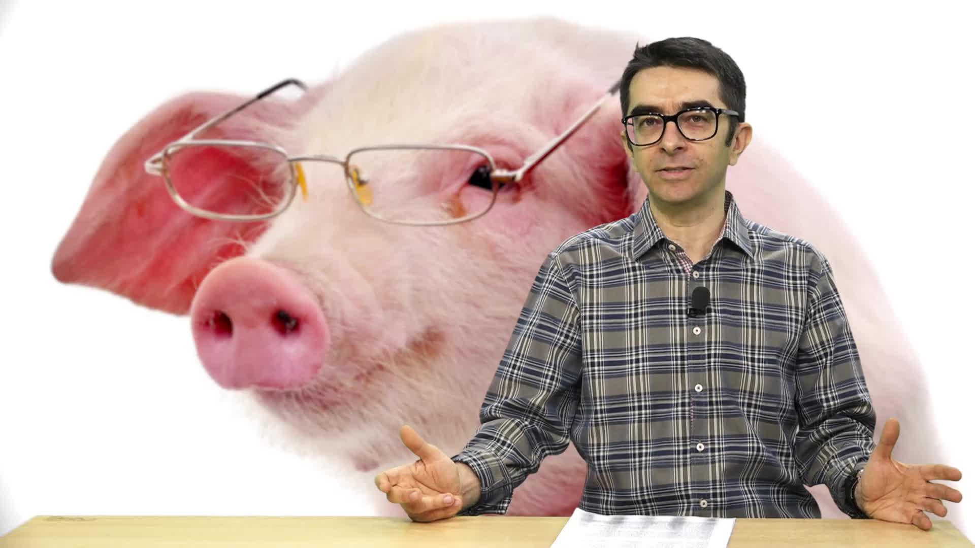 Găinuşă şi porcul